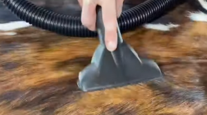 How to Cowhide Rug Vacuuming Process