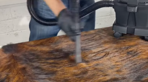 Tuto Cowhide Rug stain removal